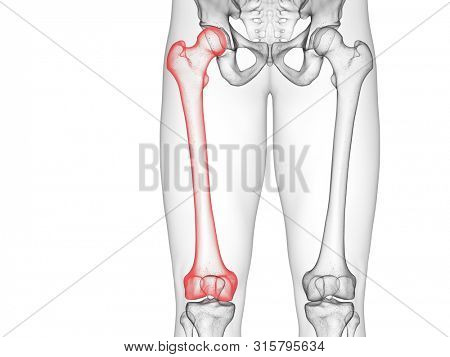 3d rendered medically accurate illustration of the femur