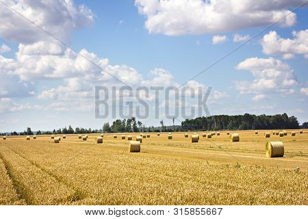 Bales Of Mowed Hay In The Field