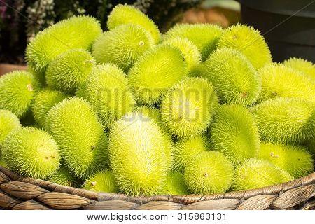 Cucumis Dipsaceus. Green Bright Ripe Fruits Of Wild Cucumber. Vegetable Hedgehog African Wild Cucumb