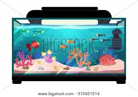 Cartoon Freshwater Fishes In Tank Aquarium Vector Illustration, Exotic Cartoon Fish In Aquarium Illu