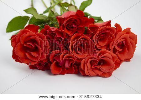Beautiful White Roses Flower In Garden. Rose Flower Background. Roses Flower Texture. Lovely Rose Ro