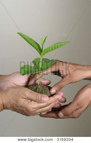 Handing Over Plant In Young Hands