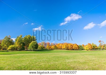 Picturesque Park Landscape With Green Lawn, High Autumnal Trees And Blue Sky. Park In Autumn