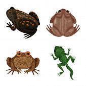 Vector design of frog and anuran icon. Collection of frog and animal vector icon for stock. poster