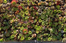 Succulent Plants Garden With Different Types Of Succulents. Floral Background. Top View, Flat Lay.
