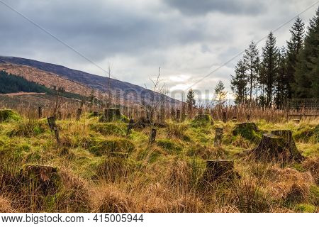 Regeneration Of A Former Deforested And Clear Felled Sitka Spruce Conifer Plantation In The Galloway