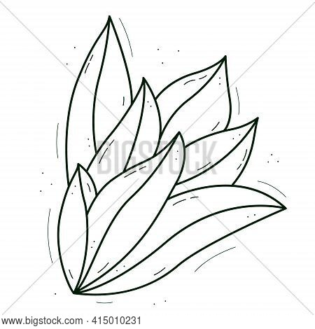 A Plant With Thick Succulent Leaves Growing From The Center. Contour Doodle Sketch Dark Green White.