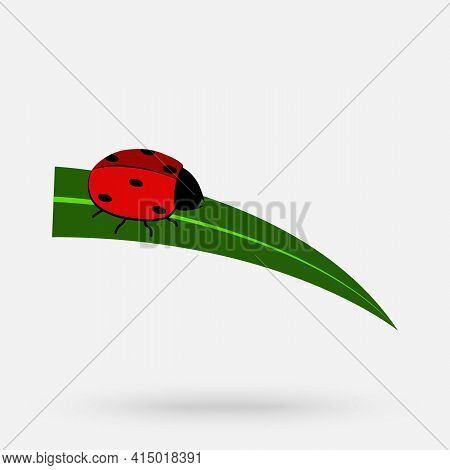 Ladybug Vector. Wallpaper Free Space For Text. Red Ladybug On The Leaf.