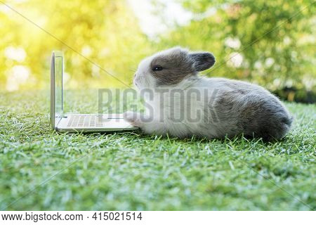 Newborn Tiny Grey White Bunny With Small Laptop Sitting On The Green Grass. Lovely Baby Rabbit Looki