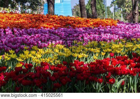 Tulip Flower In Spring, Spring Background. Spring Composition, Spring Card, Colorful Spring Backgoru