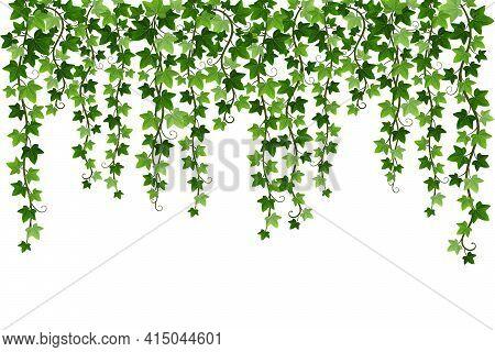 Green Climbing Hanging Ivy Creeper Plant Isolated On White Background. Hedera Vine Botanical Design
