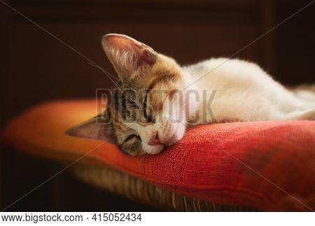 Gorgeous Kitten Sleeping On An Orange Pillow. Studio Shot, Close Up.