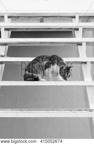 Cute, Young Tabby Cat, Sitting On The Steps Of A Metal Stairway.
