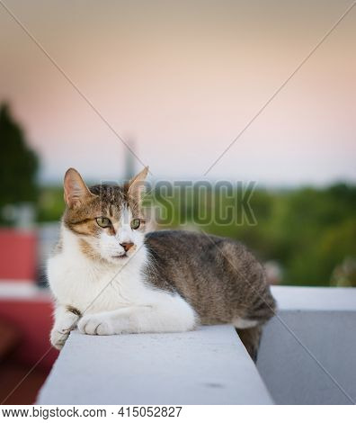 Adult Tabby, Mixed Breed Cat, Resting On A High Rooftop.