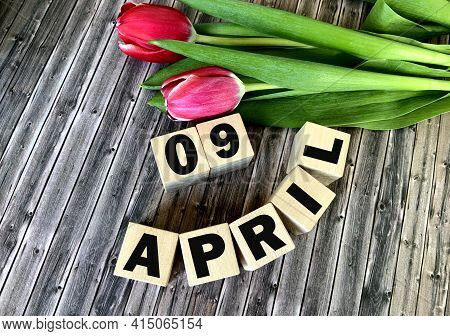 April 9 On Wooden Cubes .nearby Are Tulips On A Wooden Background .spring.calendar For April.
