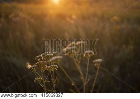 Beautiful Meadow Of Wild Flowers With Sun Flare. Soft Focus Effect Image
