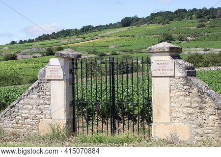 Chassagne-montrachet, France - July 5, 2020: Domaine Roger Belland Vineyard. Domaine Roger Belland I