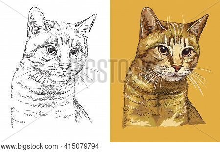 Hand Drawn Head Of Cute Ginger Cat. Vector Black And White And Colorful Isolated Illustration Of Hor