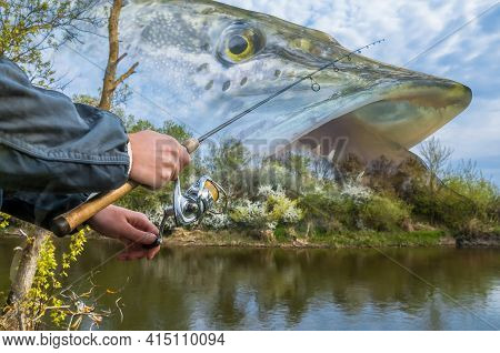Pike Fishing. Photo Collage Of Angler Hands With Spinning Rod On Soft Focus Muskellunge Fish On Rive