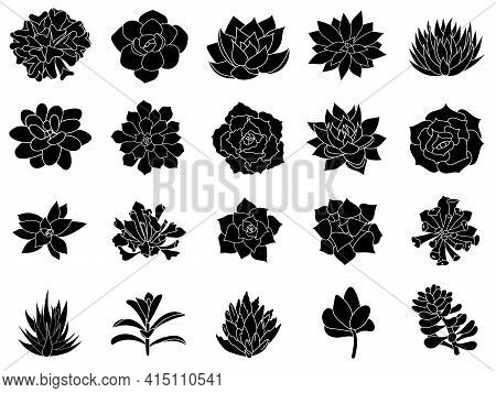 Hand Drawn Set Icon. Succulents In Style Simple. Graphics Sketch Desert Flower. Vector Illustration,