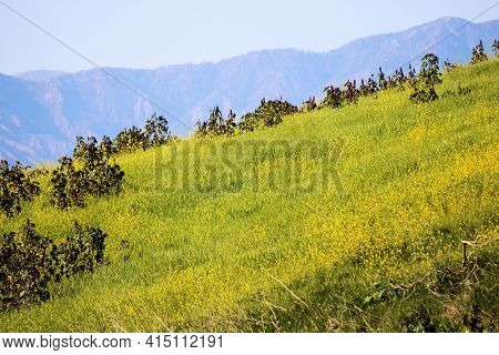 Rural Hillside Covered With Grasslands And Mustard Wildflowers Including The Rugged San Gabriel Moun