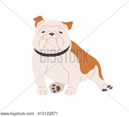 Cute English Bulldog With Funny Muzzle. Adorable British Dog In Collar. Pretty Purebred Animal With