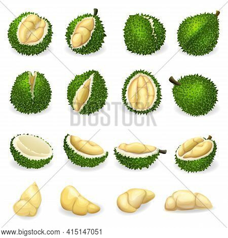 Durian Icons Set. Cartoon Set Of Durian Vector Icons For Web Design