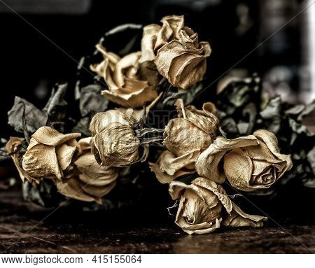 Real Dry Faded Yellow Flowers Of Roses On Dark Background