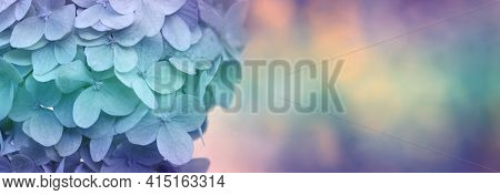 Close Up Of White Hydrangea Flowers As Background.