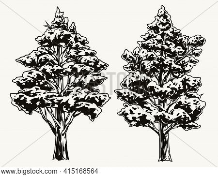 Lush Trees Vintage Concept In Monochrome Style Isolated Vector Illustration