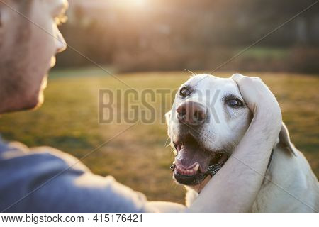 Young Man Stroking His Old Dog On Meadow. Pet Owner And Old Labrador Retriever In Nature At Beautifu