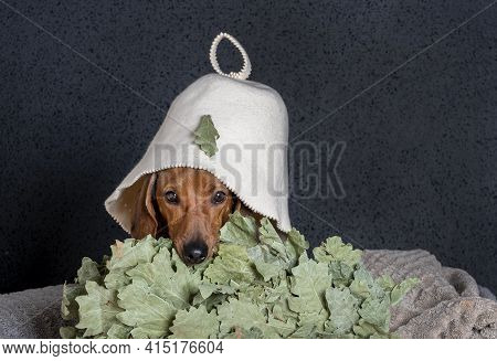 A Dachshund In A Bath Hat On His Head Lies On A Stack Of Large Towels With His Head Resting On An Oa