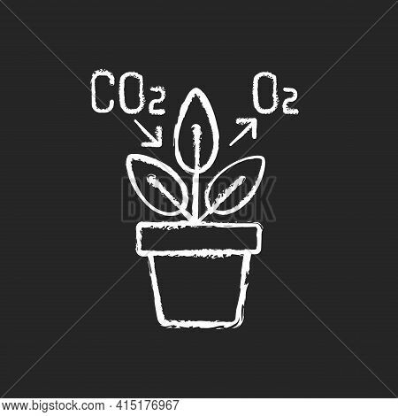Air Purifying Plant Chalk White Icon On Black Background. Plants Clean The Air Through The Process O