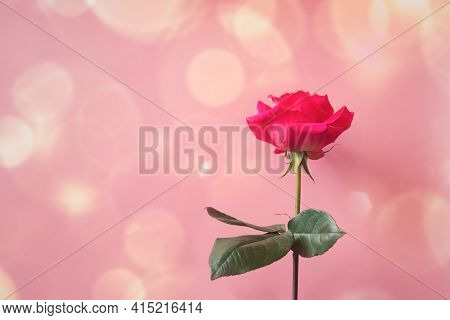 Pink Rose On Pink Background. View With Copy Space.