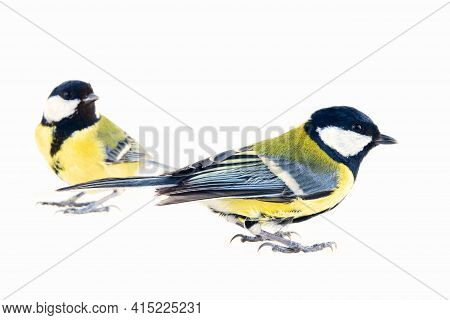 Pair Of Birds: Two Tits, Male And Female (right)