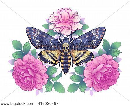 Hand Drawn Acherontia Styx Butterfly And Pink Rose Flowers On White. Colored Elegant Floral Composit
