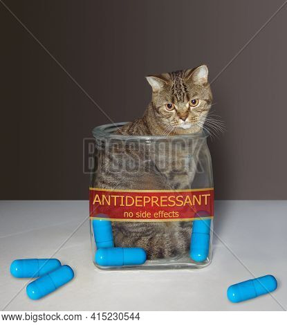A Beige Kitten Is Inside A Medical Glass Jar With A Inscription Antidepressant. There Are Some Blue