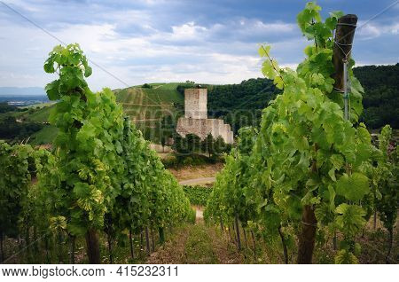 Summer View Between The Vines Of The Ruins Of Chateau De Wineck, Ancient Abandoned Castle In The Vin