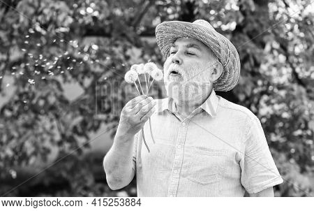 Spring Fashion Photo. Old Man Blow Dandelion Flower. Alzheimer Dementia. Concept Of Cognitive Impair