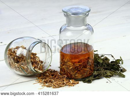 Tincture From Dried Nettle Roots And Alcohol.   Urtica Diocica, Curative Herb Tincture Is Good For H