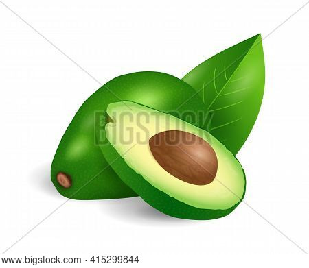 Avocado Fruit - Exotic Fruits Collection, Realistic Design Vector Illustration Close-up
