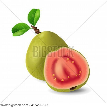 Guava Fruit - Exotic Fruits Collection, Realistic Design Vector Illustration Close-up