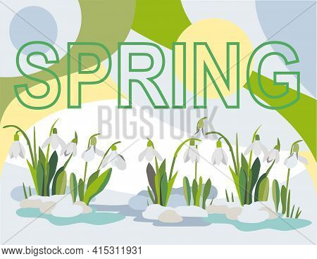 White Snowdrops Grow From The Snow, In The Background Of The Picture There Is An Inscription Spring,