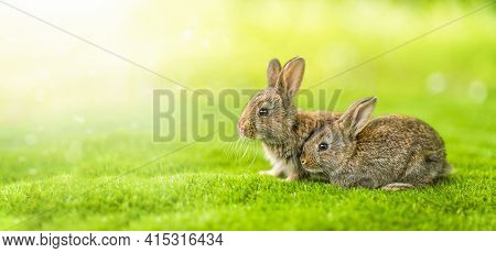 Rabbits. Cute Little Easter Bunny In The Meadow. Green Grass Under The Sunbeams. Two Rabbits On A Gr
