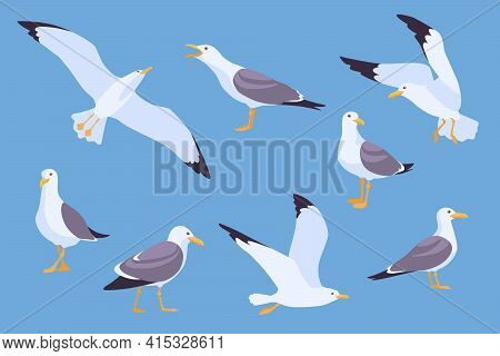 Set Of Cartoon Beach Seagulls Flying In Sky Vector Illustration. Collection Of Isolated Flat Gulls S