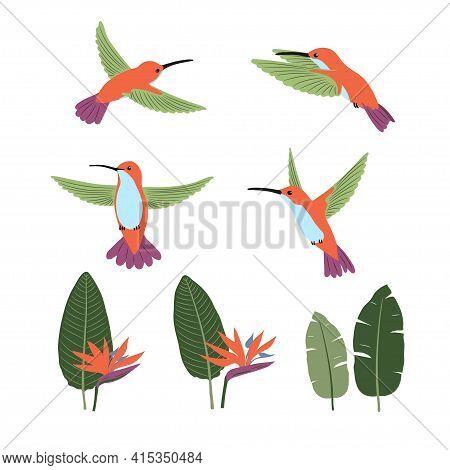 Set Of Cute Cartoon Hummingbirds And Strelitzia. Vector Collection Of Tropical Birds And Plants.