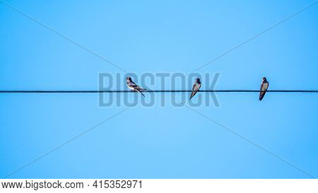 Group Of Swallows Sitting On Wires. Swallows Sit On The Electric Wire.