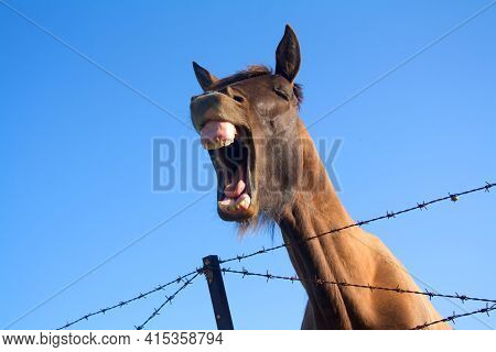 A Laughing Horse With Big Bad Teeth Grazing In The Fresh Air.