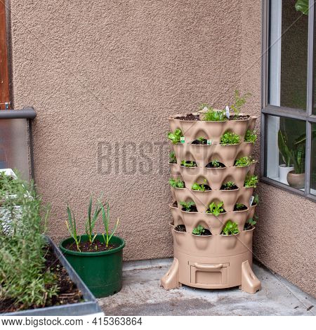 A Variety Of Small Starter Herbs And Vegetables Are Planted Vertically On An Apartment Patio Garden,