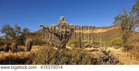 A Panoramic Desert Landscape At The Phoenix Sonoran Preserve In Arizona. Area Is Covered With Dry Sa